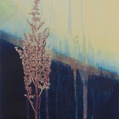 monotype, abstract, collage, mixed media, nature, michelle lindblom, contemporary