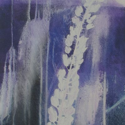 natural evolution, nature, plants, violets, Michelle Lindblom, monotype, Bend Oregon