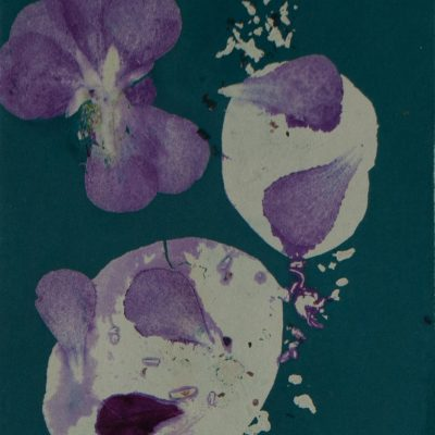 odyssey in nature, monotype, printmaking, original, nature, michelle lindblom, bend oregon, nature art, plants, phthalo blue-green, flowers